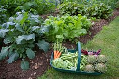 vegetables-that-grow-in-shade
