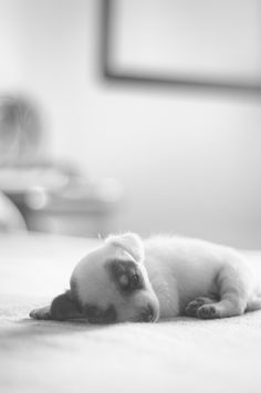OMG my heart just melted!