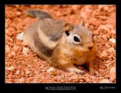 Dusty squirrel...