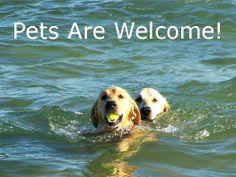 75 Best Pet Friendly Beach Rentals Images On Pinterest Beach