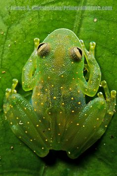 Green Frog ❤️⋱‿✿╮