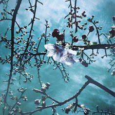 【satoqu.o.__】さんのInstagramをピンしています。 《✑︎✒︎ たみおの学校の桜 ∞ 私の中で毎年 一番先に咲く桜 今年も咲いてる 🌸 ▷▶︎▷ #loves_life#my_daily_flower#ig_japan#vsco#vscocam#vscojournal#team_jp_skyart#jj_skylove#jj_daily#jj_florals#skylovers#jj_minimal#igersjp#team_jp_#team_jp_flower#cherryblossom#はなまっぷ#花#桜色#さくら#空#雲#河津桜#桜》