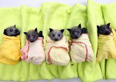 Bat babies OMG