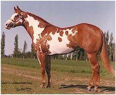 Horses wcha in aqha Paint Horses For Sale, Quarter Horses For Sale, American Paint Horse, Palomino, Beautiful Horses, Animals Beautiful, Horse Saddles, Western Saddles, Appaloosa Horses