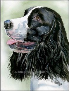 1000 Images About Judith Stein Watercolors On Pinterest
