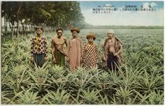 Taiwan Pictures Digital Archive - Taipics - Farmers