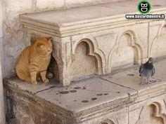 gatti curiosi comici - Cerca con Google