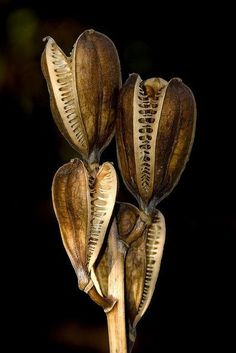 Seed pods at Kew | by Andrew Withey | Plants. organic textures | Pint…)--Tumblr