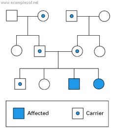 Chart illnesses or genetic traits among siblings, half