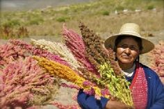 Quinoa Boom Benefits Bolivian Farmers - Good News Network Bolivia Food, Bolivia Peru, Quinoa, South American Countries, Fields Of Gold, Bobs Red Mill, What A Beautiful World, Food Staples, Slow Food