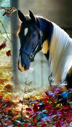 Most Beautiful Horses, All The Pretty Horses, Cowgirl And Horse, Horse Love, Zebras, Beautiful Creatures, Animals Beautiful, Animals And Pets, Cute Animals