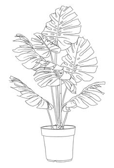 Black-Summer-DK — rinsedkitchen: Lil Monstera deliciosa Best Picture For Flowers Drawing color For Y Dragon Tattoo For Women, Plant Drawing, Garden Drawing, Plant Art, Hanging Plant, Colouring Pages, Easy Drawings, Tattoo Drawings, Tattoos