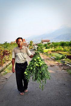 Indonesian farmer in Batu.