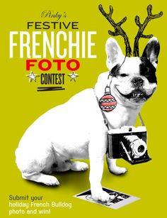 Pinky ran a Festive Frenchie Foto contest and received over 140 entries!