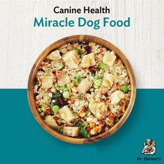 Making Miracles with Homemade Dog Food | Dr. Harvey's Canine Health