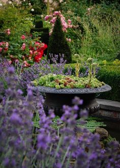 Garden Water, Water Features In The Garden, Plants, Plant, Planets