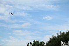 Volando, #Fotografía de Luis Otero Huarotte  #flying #volando #volar #fly #ave #bird #clouds #nubes #arbol #tree🌳 #blueskies #blueski #cieloazul #nube #clouds☁ #clearlyday #buentiempo #buentiempo🌞 #pajaro #bird🐦 #fotography #nature #naturaleza🍃 #naturaleza     #photography #hidingmoon #moon #luna #lunallena #lunallena🌕 #nightsky #cielonocturno #arbol #tree #branches #ramas #nocturno #naturaleza #nature #noches #night #noche #fullmoon