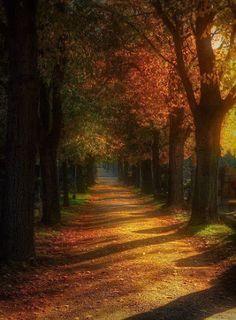 Autumn in Vienna Austria