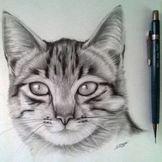Cat Drawing by LethalChris - Drawing / Art stuff - Katzen Realistic Cat Drawing, Cute Cat Drawing, Cool Art Drawings, Pencil Art Drawings, Art Drawings Sketches, Drawing Art, Cat Drawing Tutorial, Drawing Tutorials, Drawing Techniques