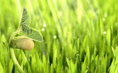 Чувствуют ли растения боль? | На минутку вспомните летний запах свежескошенной травы. Для многих людей этот запах говорит о том, что температура весьма приятная и что можно погулять/продолжить отдых/расслабиться/подышать. Для травы же этот запах сигнализирует совершенно о другом....