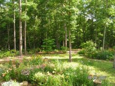 backyard landscaping on wooded lot - Google Search