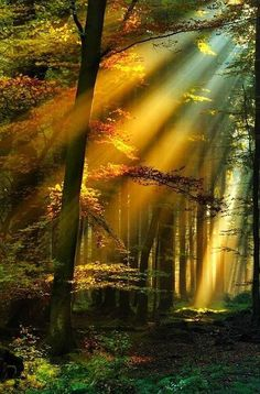 Nature is the best Artist...Golden Sun Rays, Schwarzwald, Germany.