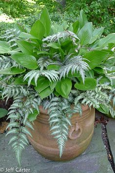hosta and painted fern, for the shade on left front side between my house and neighbor