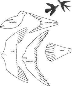 Wildlife Bird                                                                                                                                                                                 Mais