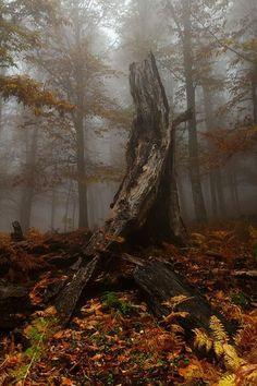 Bosque en España