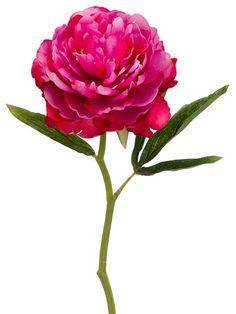 "Silk Peony in Two Tone Fuchsia - 13"" Tall Allstate Floral & Craft http://www.amazon.com/dp/B018H6NKQE/ref=cm_sw_r_pi_dp_P1OUwb01MCXK4"
