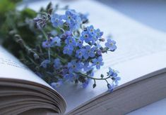 Forget me not bookmark Book Aesthetic, Flower Aesthetic, Book Flowers, Forget Me Not, Little Flowers, Jolie Photo, Photo Instagram, Gerbera, Book Photography