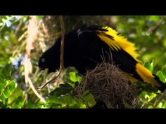 NAT GEO WILD HD (LIVING MUSIC ACTION) 2012 … | Bear Tales http://beartales.me/2014/09/30/nat-geo-wild-hd-living-music-action-2012/