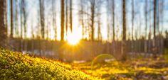 Mit Instagram um die Welt: Der Mann, der den Norden leuchten lässt