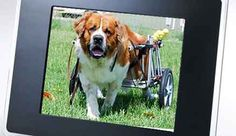 K-9 Cart Dog Wheelchairs custom built to fit our customers needs