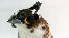 These Skull-Thumping Headphones Are Literally For the #Birds