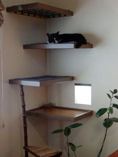 505 Best Cat Trees For Vertical Spacing Images On