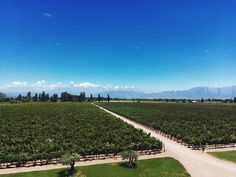 What a view. . . . . . #baquedano #winery #wine #view #travel #travelphotography #travelphoto #preandine