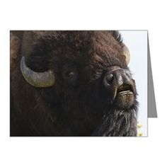 Bellowing Bull Bison Note Cards