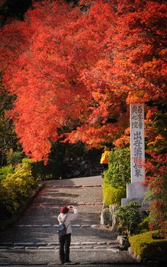 Kyoto Fall Foliage 2012
