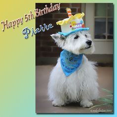 We wish Pierre our White West Highland Terrier a happy birthday! Happy Birthday To Us, Dog Stories, West Highland Terrier, Photo Story, Little Man, Stone