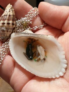 Avatar The Last Airbender Spirit Oasis Seashell by ShadyDarkCharms, $15.00