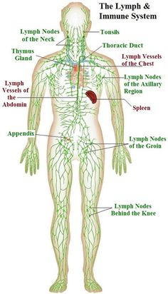 where are my lymph nodes diagram how solar power works lymphatic system medical pinterest