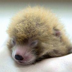 Zooborns Instagram Cute Baby Animals