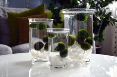 A different kind... - Marimo, Japanese Ball Moss.