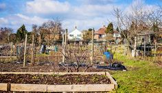 10 things every allotment owner needs...  #allotment #garden #gardening #outdoors
