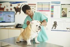 This website gives information on what a veterinarian is and how to become successful animal doctor.