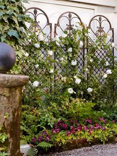 Scroll Wall Trellis is an artful display and the perfect support for climbing vines. Scroll Wall Trellis is an artful display and the perfect support for climbing vines. Jardin Vertical Diy, Vertical Garden Diy, Diy Garden, Garden Art, Vertical Gardens, Herbs Garden, Fruit Garden, Garden Landscaping, Wall Trellis