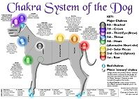 Chakra System of the Dog