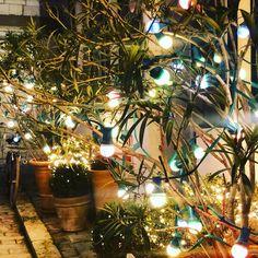 """Hotel Ile de Ré on Instagram: """"Une année 2020, lumineuse, authentique, merveilleuse et belle #hotellesenechal #arsenré #ilederé"""" Authentique, Plants, Instagram, Plant, Planets"""