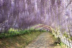Tus viajes soñados: El paraíso purpura